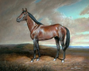 "Horse ""Walfram"" 2006, 13.7х13.6 inches, canvas, oil"